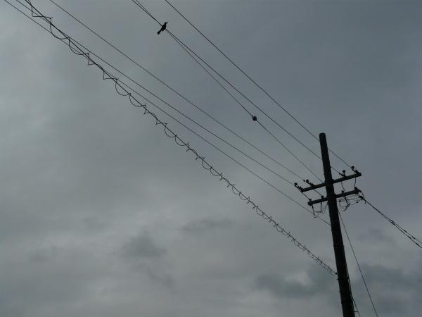 電線ぐるぐちゃ
